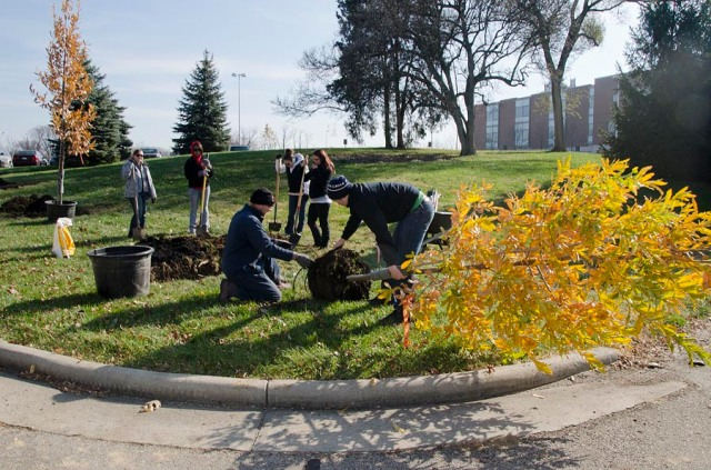 students planting trees at UCBA